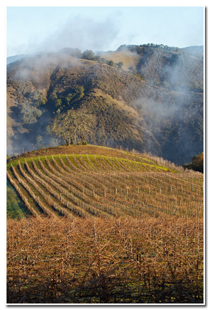rosati family winery vineyard wine keith c. flood photography landscape people
