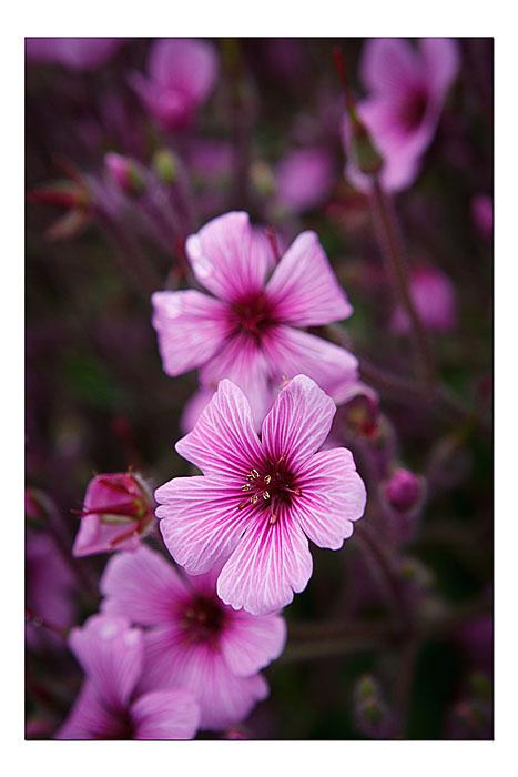 Botanical Gardens, Fort Bragg, CA